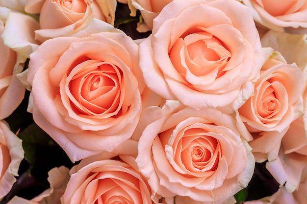 Ramo de rosas delicadas. un fondo de rosas florales. hermosas flores. un regalo para las vacaciones. flores frescas.