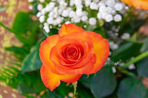 Ramo de rosas naranjas, visión cercana