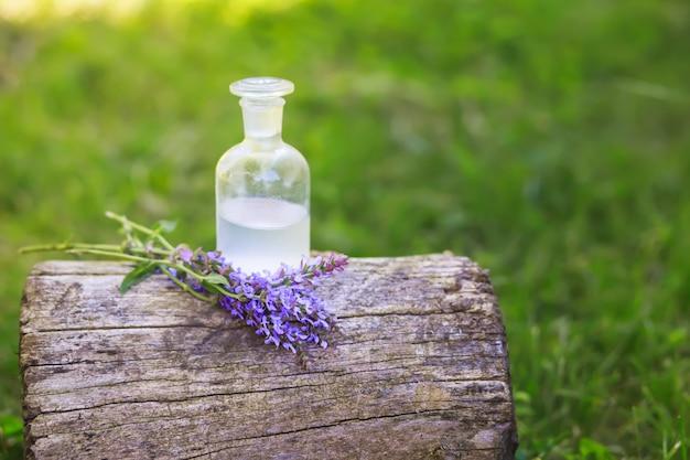 Ramo de salvia pratensis, prado de clary o prado de salvia flores de color púrpura cerca de una botella de medicamento en tocón en el bosque