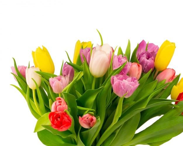 Ramo de tulipanes aislado