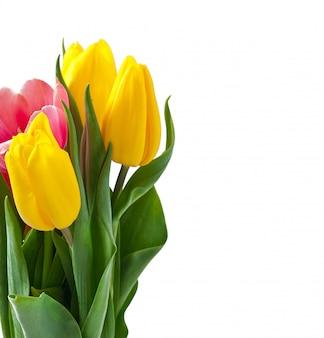 Ramo de tulipanes en blanco