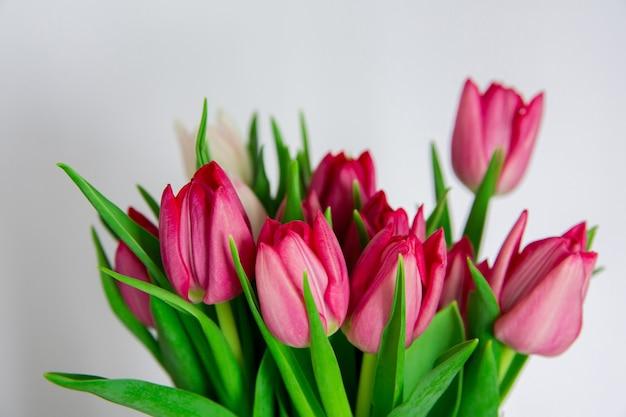 Ramo de tulipanes de flores rosadas de primavera sobre fondo blanco