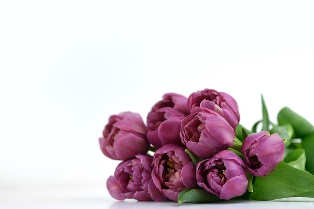 Ramo de tulipanes morados de forma pionera sobre un blanco