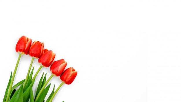 Ramo de tulipanes de primavera roja con aislado sobre fondo blanco. vista superior horizontal copyspace