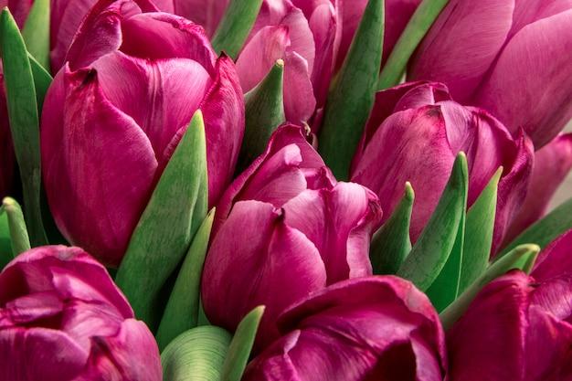 Ramo de tulipanes rosados / fondo del día de pascua. fondo de tulipanes, banner web