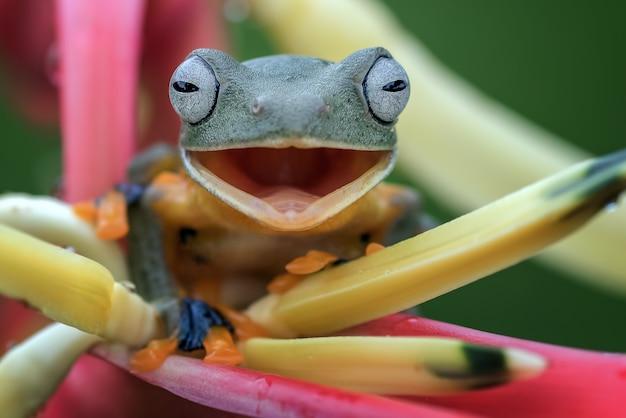 Rana arborícola verde posado sobre pétalos de una flor