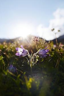 Raras flores y plantas de montaña que crecen en la ladera de las montañas del cáucaso