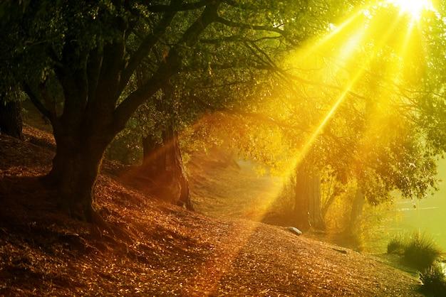 Rastro del bosque escénico