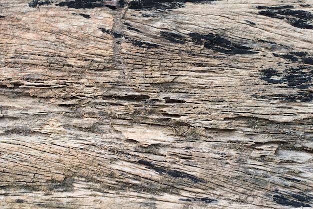 Rastros de termitas comen madera.