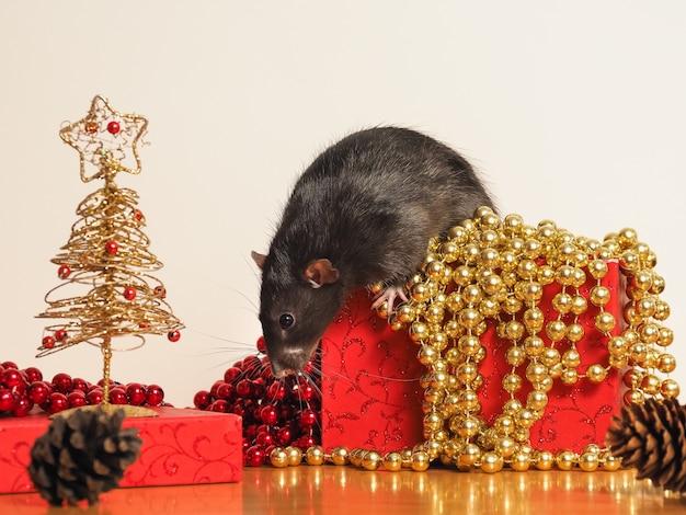 Rata dumbo en caja con decoración de año nuevo, símbolo del año.