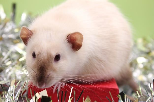 La rata es un símbolo del nuevo año 2020. tarjeta de navidad.