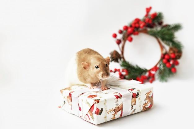 Rata de navidad símbolo del nuevo año 2020. año de la rata. año nuevo chino 2020. juguetes de navidad, bokeh. rata en el fondo de decoraciones de navidad. plantilla de tarjeta de felicitación de navidad año nuevo