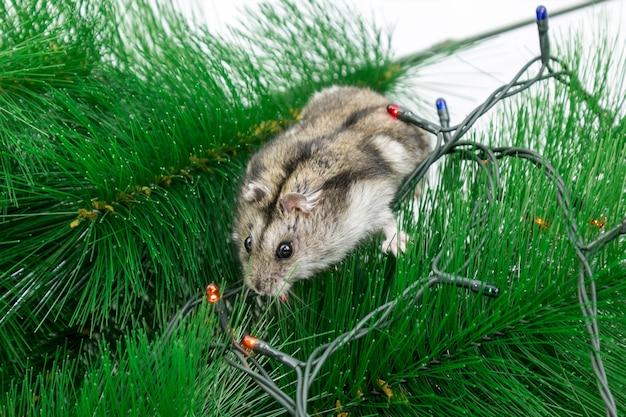 Ratón casero en las ramas del árbol de navidad.