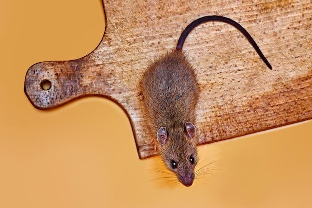 Ratón ladrón de queso sobre una tabla de madera de pan
