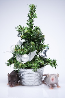 Ratones grises. fondo de navidad