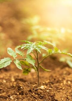 Rayos dorados del sol con planta verde