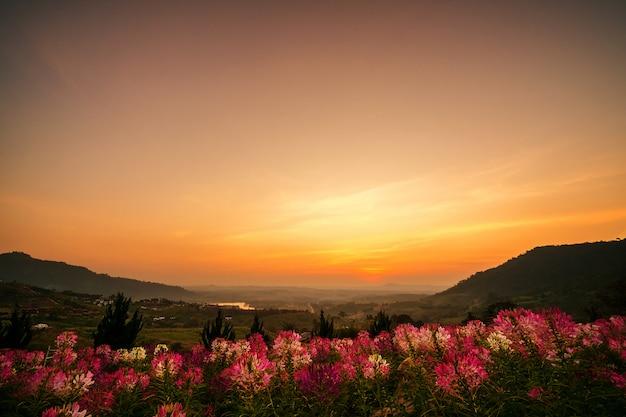 Rayos de luz del sol que brilla en las hermosas flores rojas. y excelentes vistas naturales.