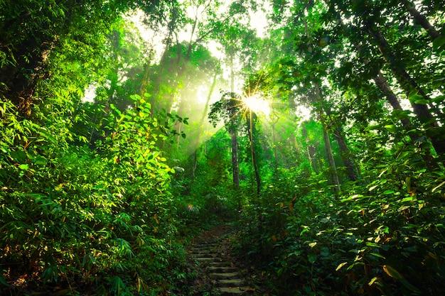 Los rayos del sol brillando a través de los árboles.