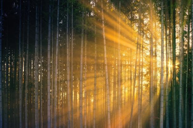 Rayos de sol que atraviesan árboles verdes