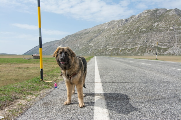 Raza mixta en la carretera de montaña