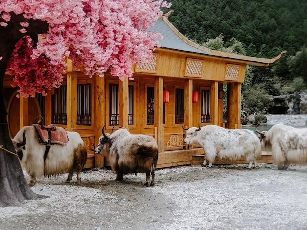 Rebaño de ovejas al aire libre