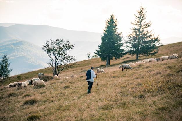 Rebaño de ovejas en las montañas en el fondo del atardecer