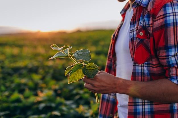 Recortar imagen de agrónomo parado en un campo y sosteniendo una planta en su mano