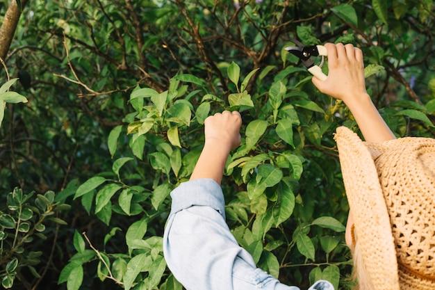 Recorte de mujer cortando ramas de los árboles