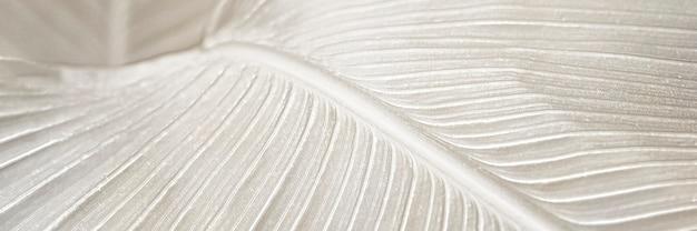 Recurso de diseño de fondo de hoja cremosa ave del paraíso