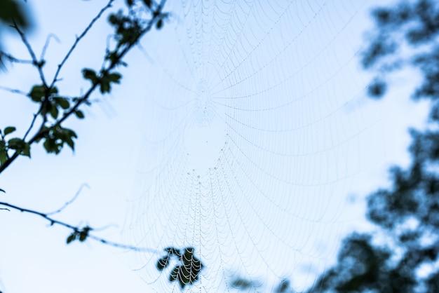 Red de araña en la rama de un árbol