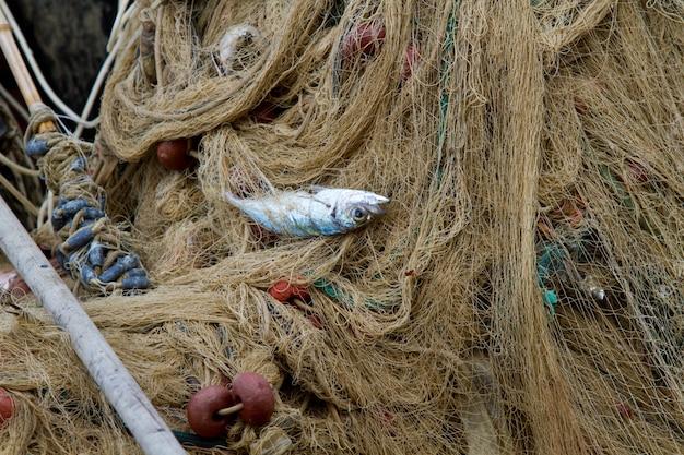 Red de pescadores con peces enredados.