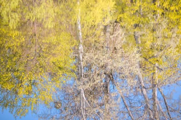 Reflejo de árboles en el agua en primavera