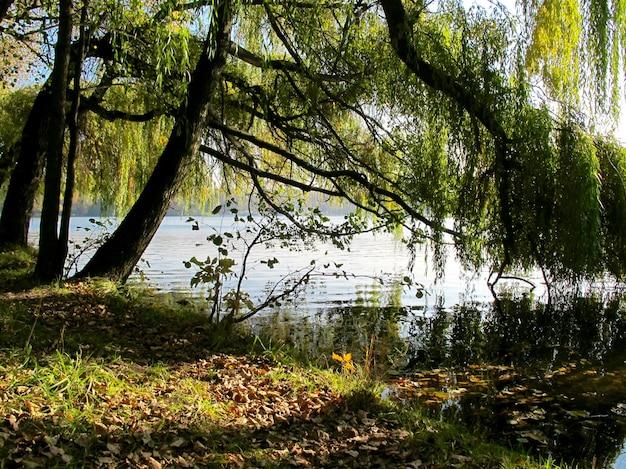 Reflejo del follaje otoñal de árboles en el agua del lago