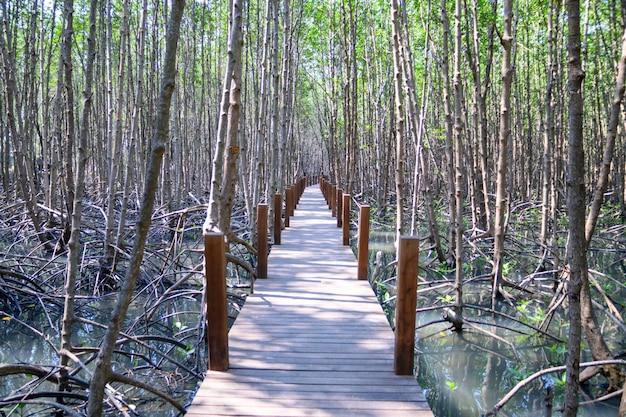 Reflexión de bosque de manglar en el lago