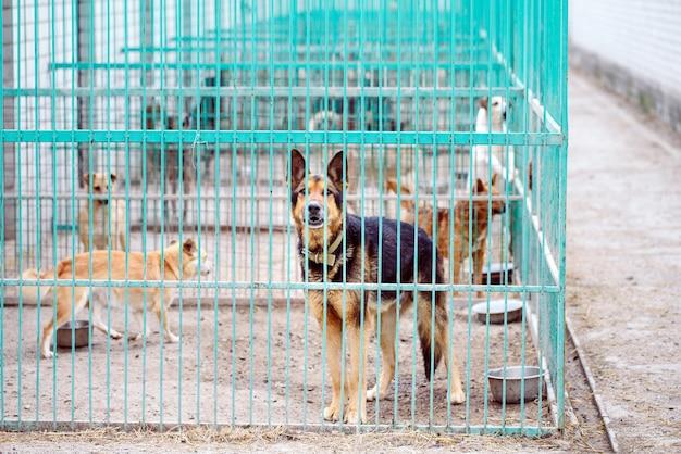 Refugio para perros callejeros.