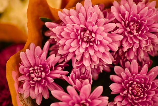 Regala un ramo de flores de crisantemos escarlatas.
