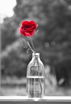 Regalo romántico ramo de flores monótona