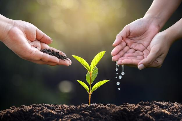 Regar las plantas a mano. mano femenina que sostiene el árbol en la naturaleza, campo, hierba, concepto de conservación forestal