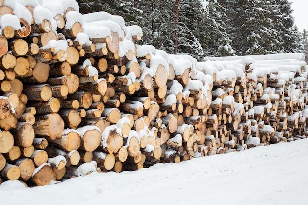 Registro de invierno en el bosque nevado