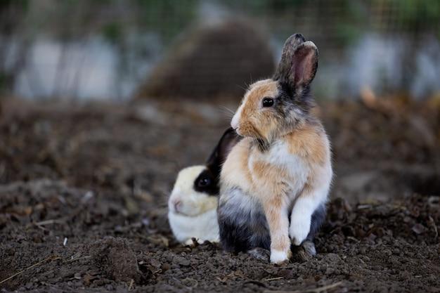 Relajación o postura de reposo de conejo