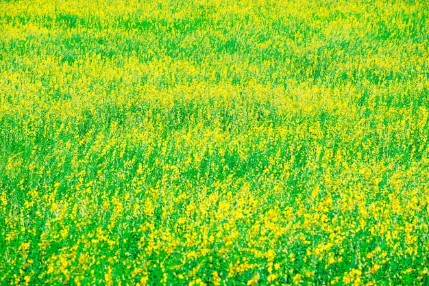 Relajándose en un prado en el sol del verano, tiempo de primavera.