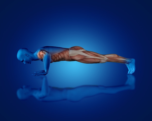 Render 3d de una figura médica azul con mapa muscular parcial en posición de flexión