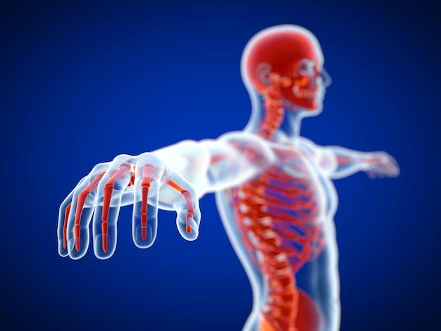 Representación 3d de una vista de esqueleto rojo con rayos x