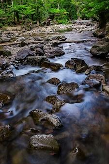 Reserva estatal de liffey falls en la región de midlands de tasmania, australia.