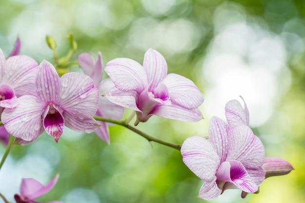 Resumen borrosa de orquídeas moradas