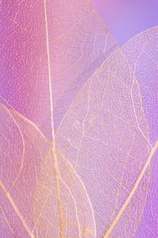 Resumen hermosa hoja púrpura transparente