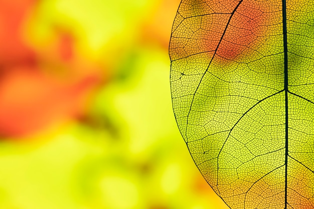 Resumen hoja de otoño transparente