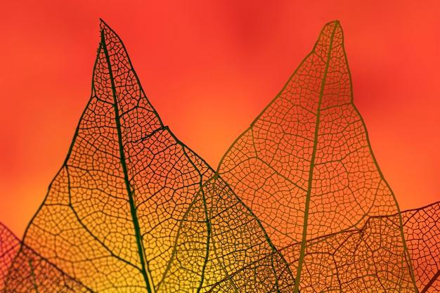 Resumen hojas con luz de fondo roja