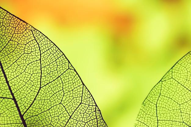 Resumen hojas con luz de fondo verde