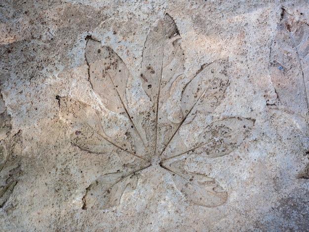 Resumen de sello de textura de hoja sobre fondo de piso de concreto de grunge.